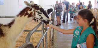 santa cruz county animal rules